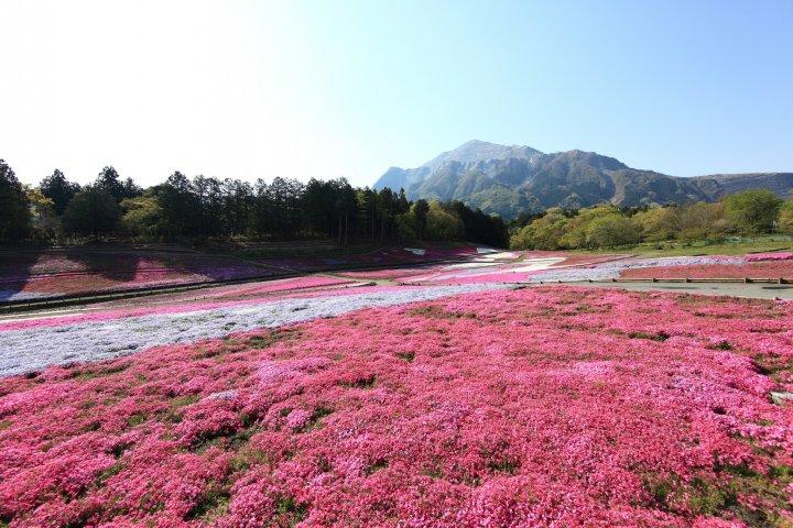 La Préfecture de Saitama