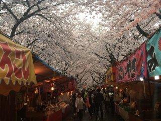 Un festival des sakura près du pavillon d'or