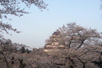 Aizuwakamatsu Castle Annual Market