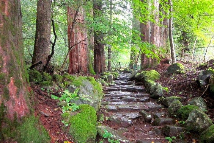 Takino'o Path in Nikko