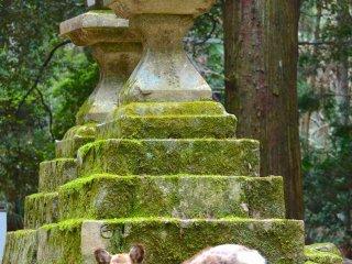 Lối vào của Kasuga Taisha