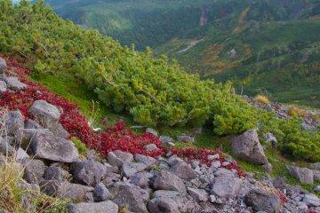 ภูเขาคุโระในอุทยานแห่งชาติ Daisetsuzan