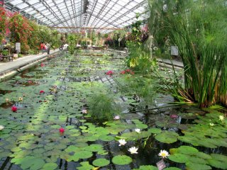 Indoor lily pond about 100 meters long!