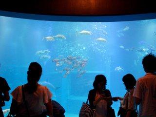 The main tank at the Kaiyukan Aquarium