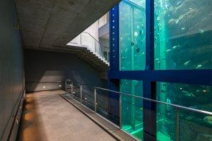 Descending along a massive fish tank