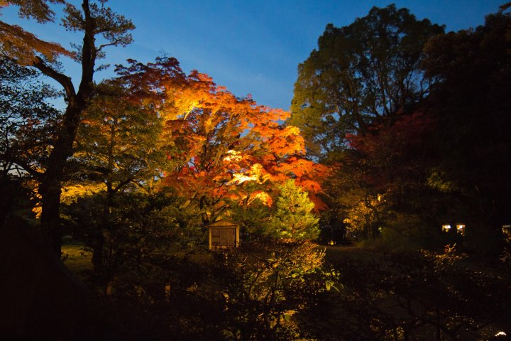 Rikugien Garden Autumn Illumination