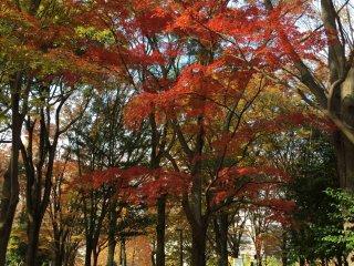 Promenade sous des arbres magnifiques