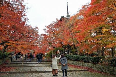 ใบไม้เปลี่ยนสีที่วัดชินเนียว-โดะ