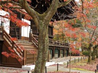 ใบไม้แดงทั้งบนต้นและพื้นดิน