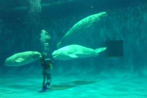 Công viên hảidương học Aquas Shimane