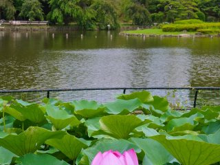 Pond at Chiba Park offers row boat facilities too