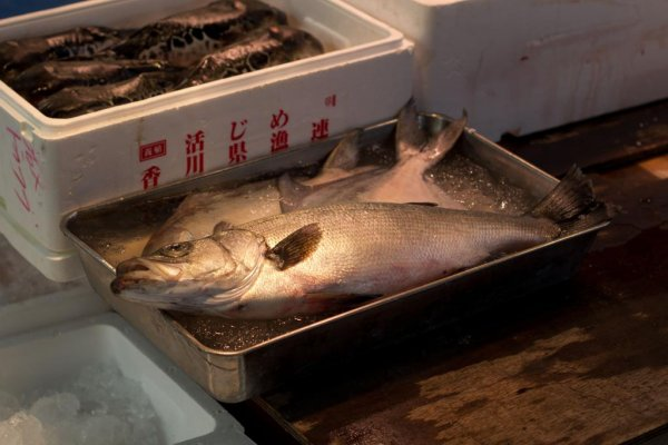 Delicious fresh fish everywhere