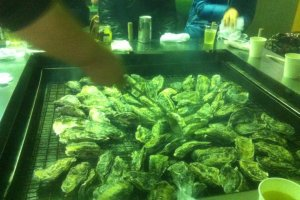 Getting the oysters on the grill