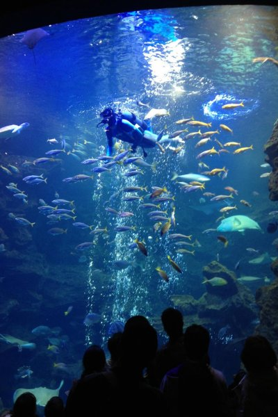 Diver enters huge tank to feed the fish