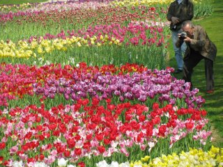Many Japanese people like to take photos of flowers