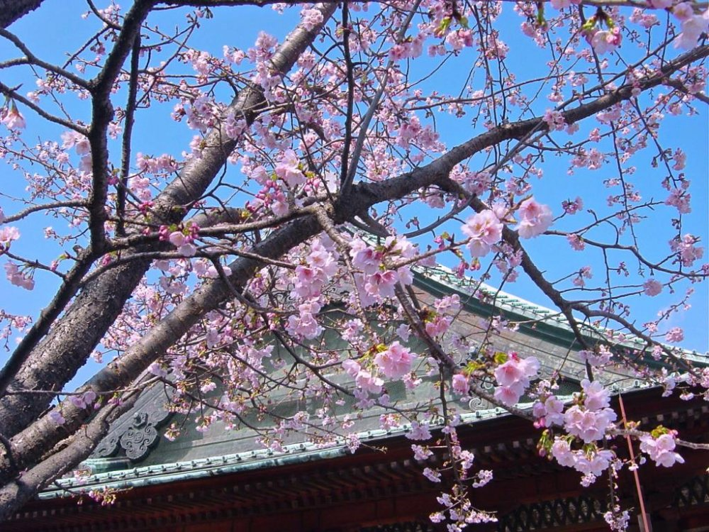 Spring-time at Gokukuji Temple