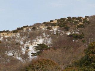 Sunshine and snow near Makinoto