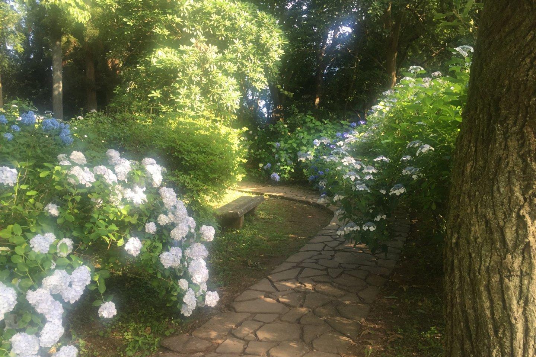 Flower Garden walkway