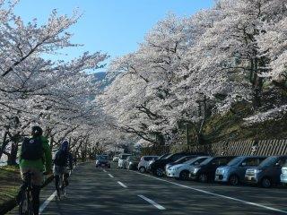 자전거와 자동차 공용 도로