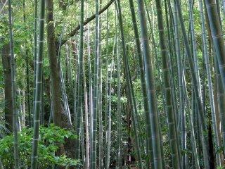 """As árvores crescem na Aldeia Shikoku, proporcionando agradáveis sombras. O verde dá um ar mais realista aos edifícios """"transplantados""""."""