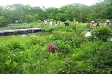 Hakone Botanical Garden of Wetlands