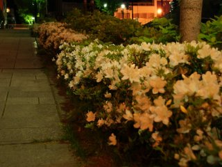 Back down the hills of Motomachi