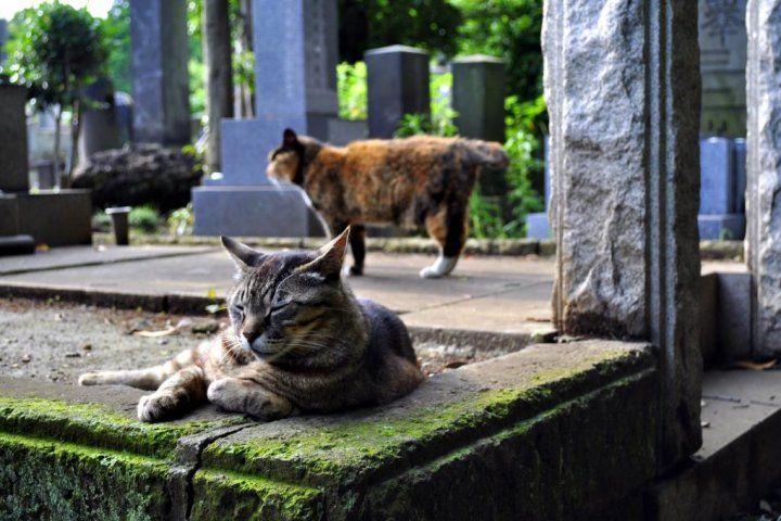 The Cats of Yanaka