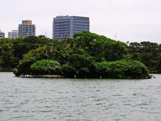 An island of trees in the middle of the lake. I spotted a few large birds close to this island.