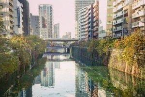 Meguro River (1)