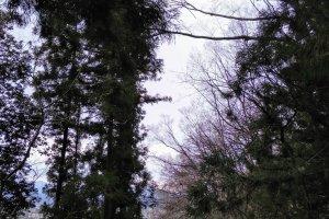 Mountain road trail