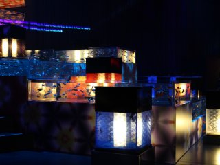 TARIAN MENAWAN: Mengagumi ikan mas berkilauan di bawah lampu warna-warni dalam koleksi akuarium