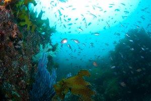 Wonder of nature under the sea of Omijima