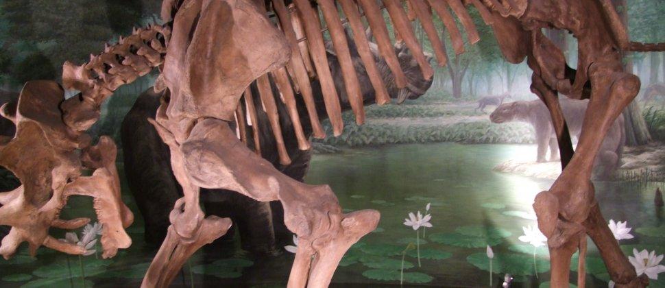 Museu dos Dinossauros, Fukui