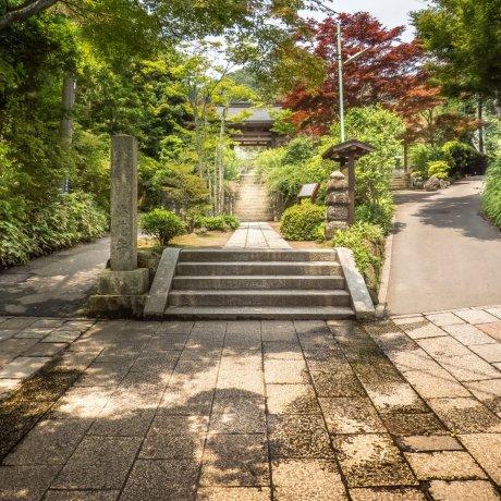 Kamakura's Kaizoji Temple