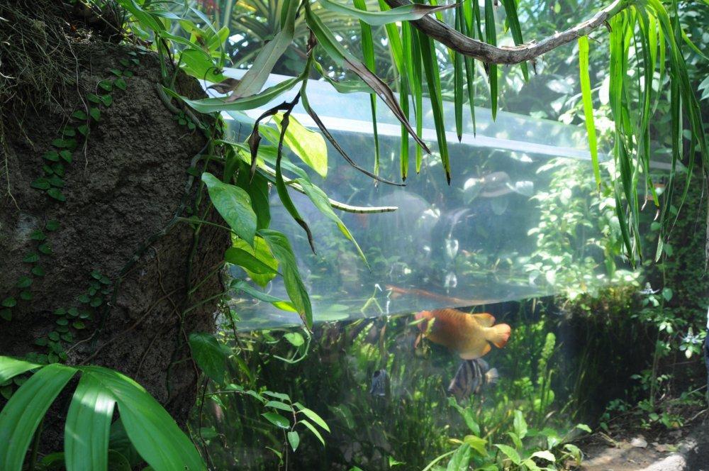 Fukushima aquamarine fukushima japan travel pr parez for Jardin iwaki