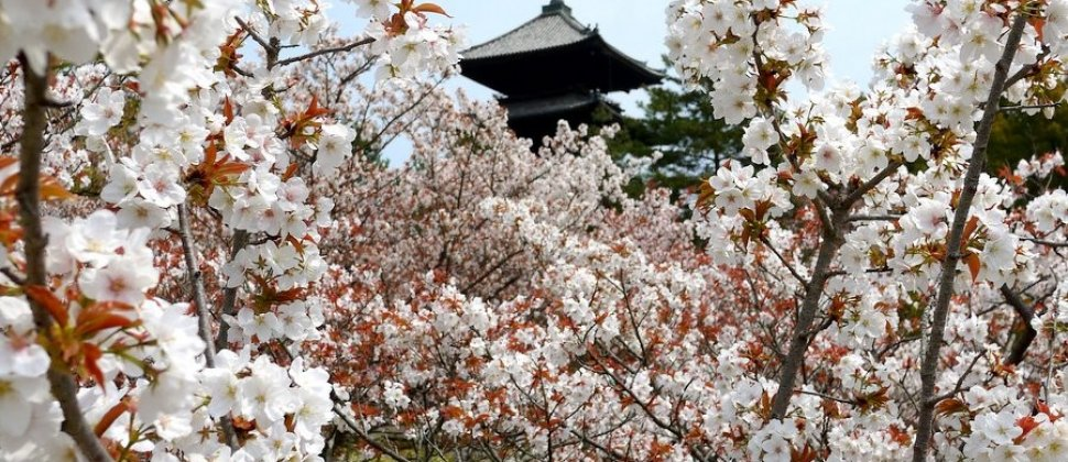Templo Ninna-ji em Quioto