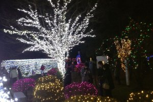 Kotodai Park is aglow through the night.