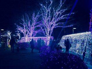 Uma secção do Parque Kotodai iluminada num azul de inverno