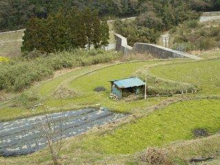 Jalan yang berupa pematang sawah kecil di daerah pegunungan