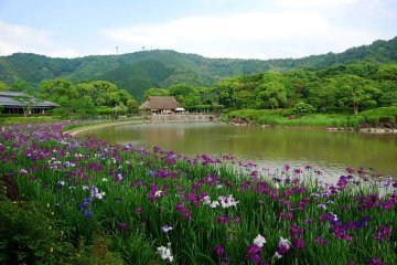4-Day Self-drive Ohenro, plus Shikoku highlights tour