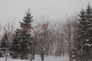 <p>ต้นไม้บนยอดเขาในยามฤดูหนาว</p>