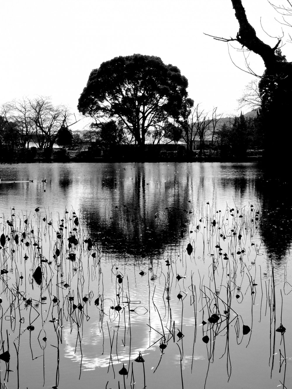 Osawa-no-ike Pond in late December