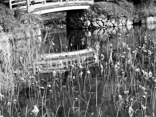 Lotus and bridge