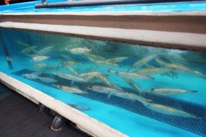 บ่อปลาหมึก