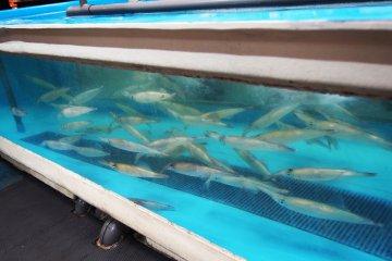 <p>บ่อปลาหมึก</p>
