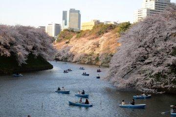 Chidorigafuchi จุดชมซากุระในTokyo