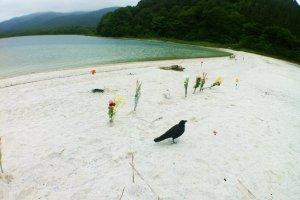 ดอกไม้เรียงรายริมทะเลสาปอุโซริ น้ำมีส่วนผสมของกรดมากจนแทบไม่มีสิ่งมีชีวิตอาศัยอยู่เลย ไม่มีแม้แต่แมลง มีเพียงปลาชนิดเดียวที่ทนทานต่อกรดในน้ำได้ และนกกาไม่กี่ตัว