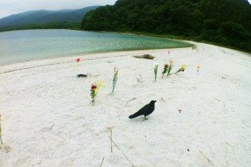 <p>ดอกไม้เรียงรายริมทะเลสาปอุโซริ น้ำมีส่วนผสมของกรดมากจนแทบไม่มีสิ่งมีชีวิตอาศัยอยู่เลย ไม่มีแม้แต่แมลง มีเพียงปลาชนิดเดียวที่ทนทานต่อกรดในน้ำได้ และนกกาไม่กี่ตัว</p>
