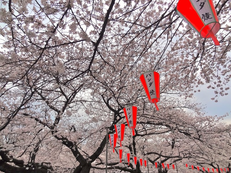 <p>At sunset, 1,300 lanterns are lit so visitors can continue their hanami experience through the late evening.</p>
