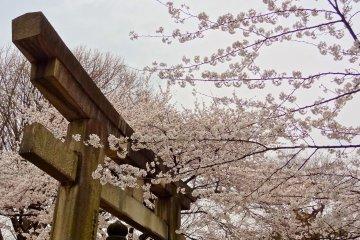 <p>The torii gate entrance to Toshogu&nbsp;Shrine at Ueno Park</p>